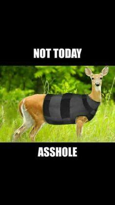 Deer in bullet proof vest