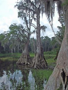 Another great picture of Lake Louisa - Clermont, Florida. The drought a few years ago was devasting to these lakes. Piers and docks just went out onto the dried up lake bottom. Florida Trees, Old Florida, Central Florida, Hillside Garden, Garden Villa, Florida Sunshine, Sunshine State, Clermont Florida, Manatees