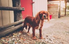 Basic Dog Training - See PIC for Various Dog Care and Training Ideas. Best Dog Training Books, Basic Dog Training, Potty Training, Most Beautiful Dog Breeds, Beautiful Dogs, Dog Commands Training, Easiest Dogs To Train, Cool Pets, Yorkshire Terrier