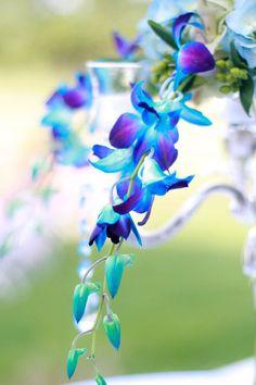Gorgeous color, flowers