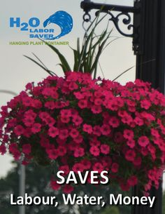 Hanging baskets for homes and public spaces that come in a wide variety of materials and sizes, with great water saving features. Save Water, Hanging Baskets, Horticulture, Plants, Fall Hanging Baskets, Vegetable Gardening, Flora, Plant, Hanging Basket Storage