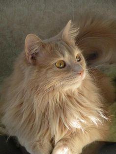Persian Royalty