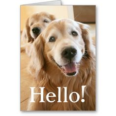 165 best golden retriever greeting cards postcards images on smiling golden retriever hello card m4hsunfo