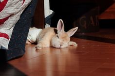 sleepy bun - love how his paws are splayed out!