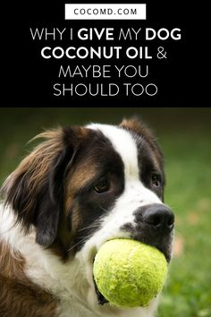 Ideas For Dogs Training Tips Animals Dog In Spanish, Dog Ball Launcher, Joint Supplements For Dogs, Expensive Dogs, Coconut Oil For Dogs, Diy Dog Toys, Dog Smells, Education Canine, Can Dogs Eat