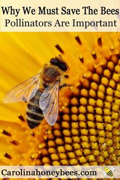 Save the Bees & pollinators that make our world diverse. You dont have to be a beekeeper to love bees.