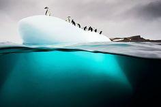 Dit moet je zien: prachtige fotoserie van dieren onder water | Columbus Travel