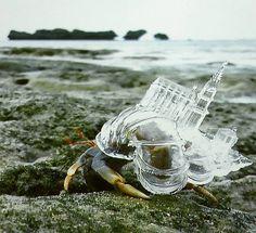crab-shells-landmarks-12