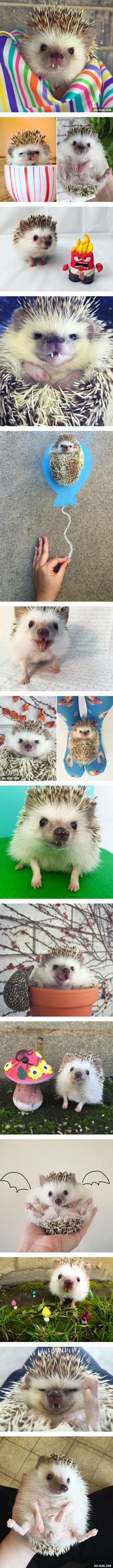 Meet Huff: The Vampire Hedgehog