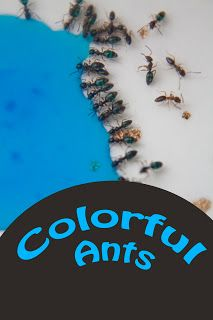 Colored Ants, experiment with ants and what they eat, so very cool