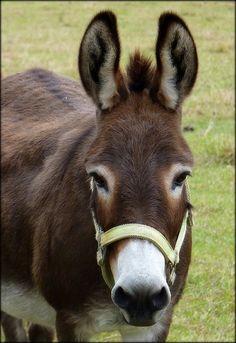 Sweetest Donkey