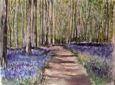 Bluebell woods by Miranda Markham