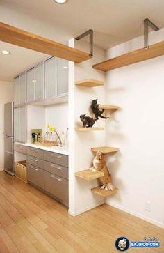 amazing creative unusual pets friendly furniture designs interionr ideas pics images pictures photos 19 41 Pictures Of Awesome Pet Friendly Furniture