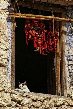 Gato guardián by Manuel Sagredo on Flickr**