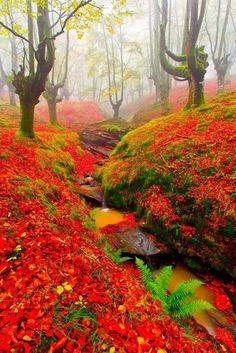 Природный парк Горбеа