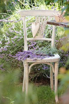I love this special little chair with #lavender on top in the #garden