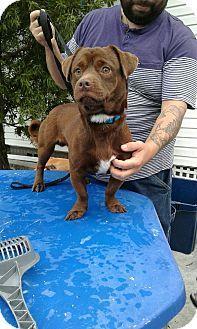 Fort Myers, FL - Pug/Dachshund Mix. Meet Cisco, a dog for adoption. http://www.adoptapet.com/pet/17275540-fort-myers-florida-pug-mix