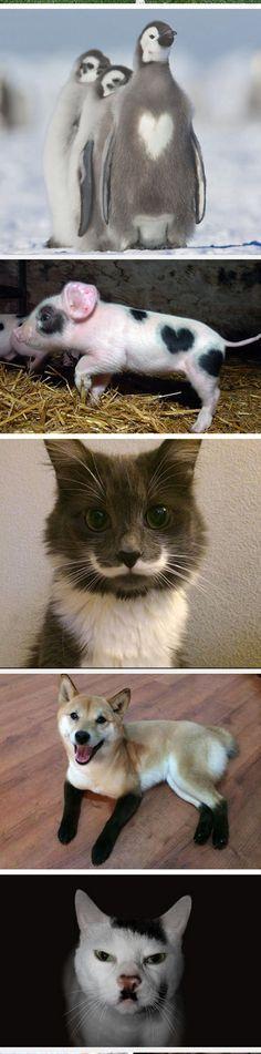 Animals With Unusual Fur Markings
