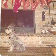 Schultz Dogs, Animals, Animales, Animaux, Pet Dogs, Doggies, Animal, Animais