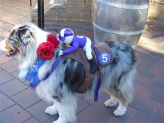 Winner! Woof!  Tyler the Race Horse wins my Halloween Photo Contest.
