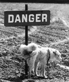 Estou mijando pro perigo, cara! Viaje no tempo com fotos cômicas de Paris na década de 50 | Virgula