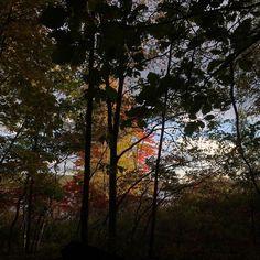 #WonderWatch 2015-121 Through the Veil #FavoriteTimeOfYear #October #fall #foliage #FallFoliage #silhouette #nature #NaturePhotography #SandyLongPhotos #GlimpsesOfFall #Portal #UpperDelawareRiverRegion #PikeCountyPA #Autumn #beauty #inviting #leaves #oh #PoconoMtns #forest