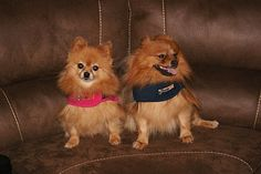 Do Thundershirts really work on dogs? Enter our giveaway and find out! Ends 9/6/12   Reviews By Rachel