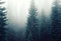 #firs #fog #foggy #forest #mist #misty #mysterious #trees