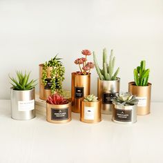 Let's take a look at the benefits of metal planters for plants. Metal Planters, Flower Planters, Ceramic Planters, Hanging Planters, Flower Pots, Planter Pots, Indoor Fountain, Planting Vegetables, Ornaments Design