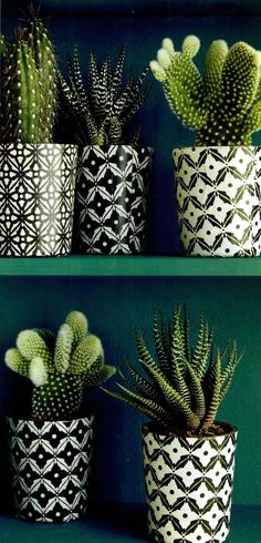 black and white geometric pots with cacti