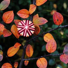 Goldglänzender Rokoko-Knopf im Herbstlaub.