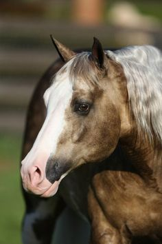 American Paint Horse stallion Big Chex To Cash