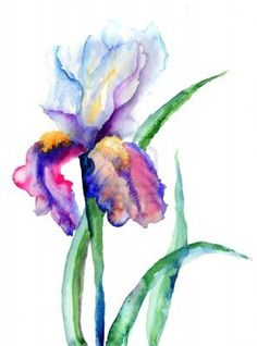 Iris flowers, watercolor illustration  Stock Photo - 17289256