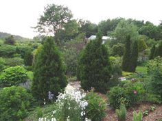 Garden view - we love shrubs and conifers for structure! At Spring Valley Roses Hardy Roses.