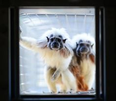 Take action now for all monkeys in all labs!