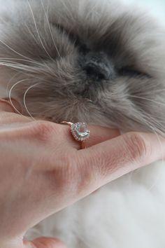 kitties and jewels Jewelery, Fine Jewelry, Jewelry Design, Wedding Rings, Engagement Rings, Jewlery, Enagement Rings, Jewels, Jewerly