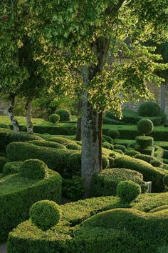 What a great green garden.