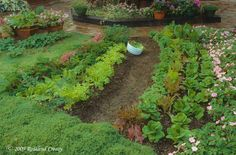 Greens for Your Edible Landscape