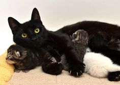 rescue cat mama cares for her kitten and adopted kitties toni's cat rescue
