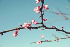 Spring spring.