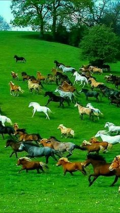 The hoofbeats were many but our hearts were one... In a time that the wild horses ran free!!