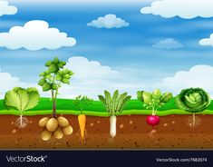 Fresh vegetables in the ground Royalty Free Vector Image Science Activities, Activities For Kids, Projects For Kids, Crafts For Kids, Plant Lessons, Nursery Crafts, Garden Mural, School Cartoon, Educational Websites