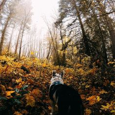 Photo of the Day! @lobene33 letting the pup take the lead on the way up to #Dirtyfacelookout! #GoPro #GoProPets #DogsofInstagram #PackLeader #PNW #FF #adventure #random #beautiful