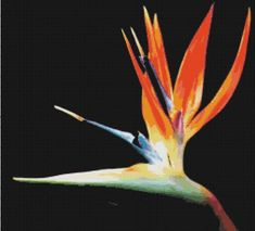 Learn all about the EXOTIC Bird OF Paradise Plant and how to care for this tropical bird of paradise flowers. Most Beautiful Flowers, Unique Flowers, Exotic Flowers, Tropical Flowers, Beautiful Birds, Sun Flowers, Orange Flowers, Pretty Flowers, Colorful Flowers