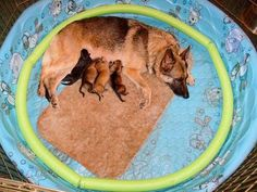whelping box on pinterest dog kennels dogs and puppies