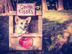 Corgi Kisses
