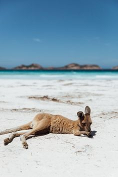 La plus belle plage du monde - Josie Loves - Beauty Black Pins Australia Visa, Perth Australia, Western Australia, Australia Travel, Brisbane Queensland, Great Barrier Reef, Couple Bi, Places To Travel, Places To Visit