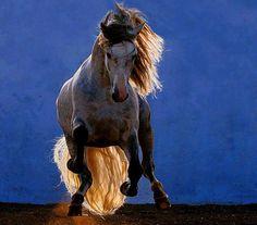 Ah, cavalli, cavalli… che cavalli siete voi! I turbini dimorano forse tra le vostre criniere? Un acuto orecchio vibra forse in ogni vostro nervo? Udita appena dall'alto la nota canzone, tutti all'unisono hanno proteso i petti di bronzo, e senza quasi toccare con gli zoccoli terra, non si disegnano più che in linee allungate, trasvolanti a mezz'aria, e divora lo spazio la trojka, tutta infusa dell'afflato di Dio! (Nikolai Gogol)