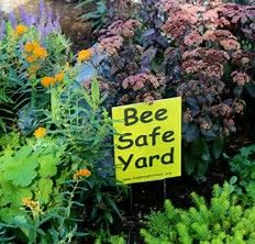The art of gardening meets solid science-based horticultural advice; musings upon Mother Nature by a Master Gardener. Bee Friendly Flowers, Bee Safe, Sedum Plant, Bountiful Garden, Bee Boxes, Living Off The Land, Garden Planning, Mother Nature, Yard
