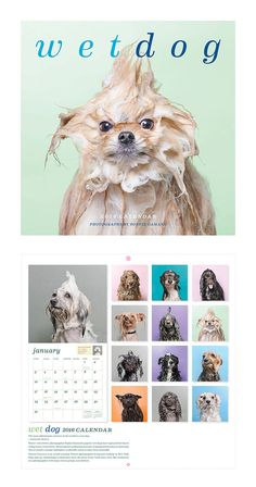 Captured in that soggy moment right before the big shake-off, these photos of soaked pups will capture the dog lover's heart. Featuring a lovely canine for each month, time is sure to fly by from all t...  Find the Wet Dog Calendar, as seen in the The Pet Boutique Collection at http://dotandbo.com/collections/holiday-boutiques-the-pet-boutique?utm_source=pinterest&utm_medium=organic&db_sku=113239